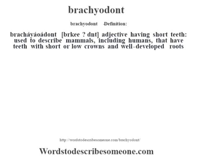 brachyodont   - Definition:bracháyáoádont [br‡kee ? d˜nt] adjective   having short teeth: used to describe mammals, including humans, that have teeth with short or low crowns and well-developed roots